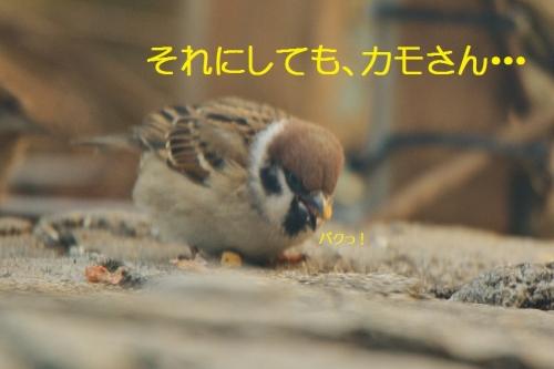 100_20160224220318e63.jpg