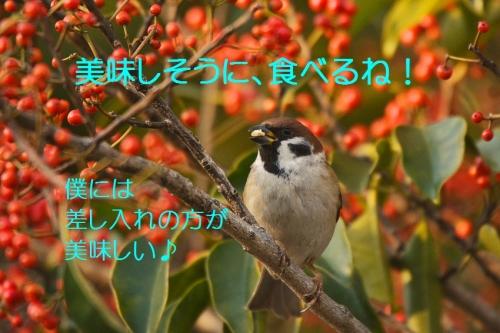 105_20160124224240ab3.jpg