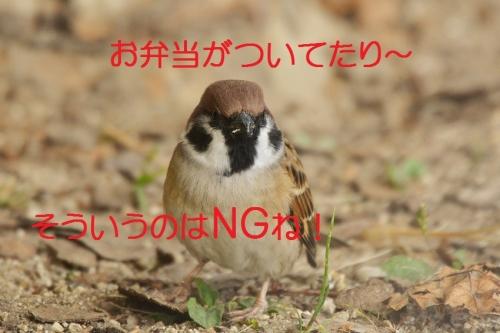 110_20151116202716ec9.jpg