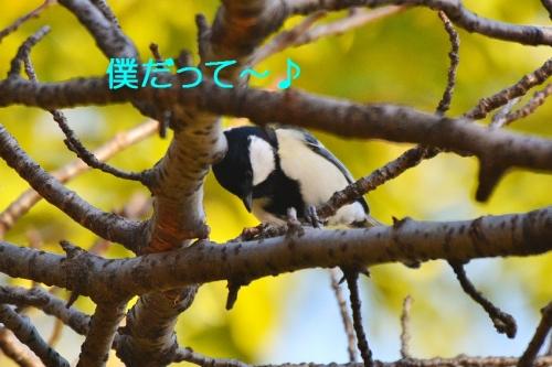 110_20151118174426faa.jpg