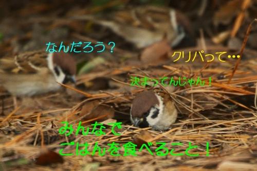 110_20151224214250b59.jpg