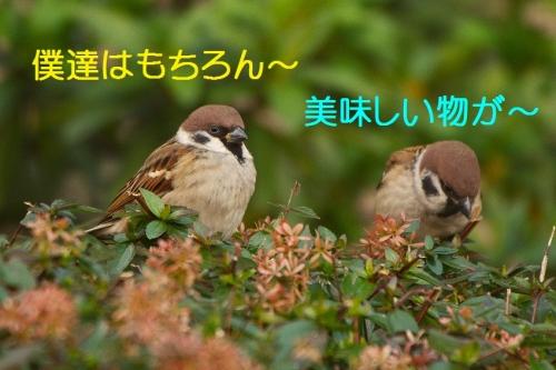 110_20151230215609289.jpg