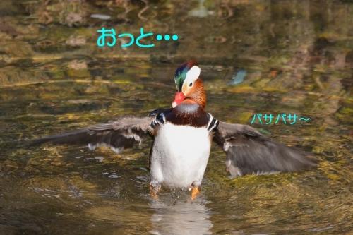 110_20160103213041959.jpg