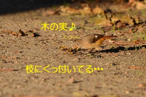 110_201601191718445c8.jpg