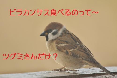 117_20160124224432e23.jpg