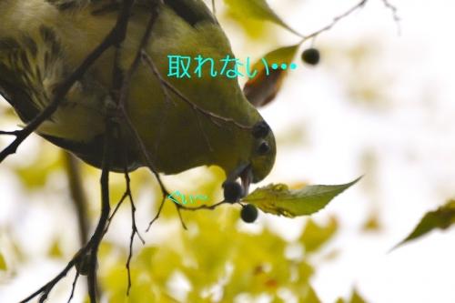 120_20151104205311cff.jpg