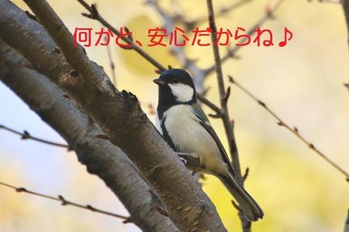 120_201511171757236a2.jpg