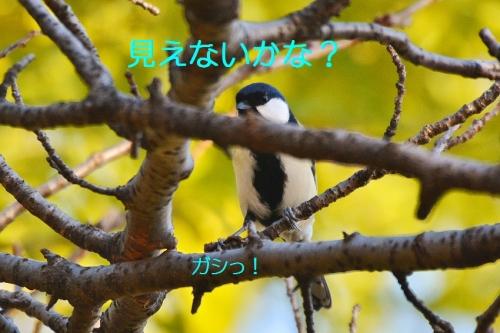 120_20151118174428670.jpg