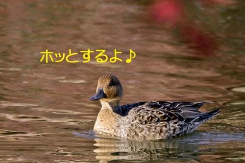 120_20151203223243dfb.jpg