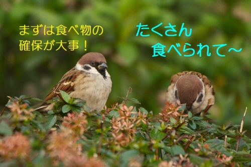 120_20151230215611b79.jpg