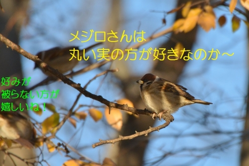 120_20160112184911c91.jpg