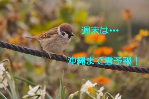 120_20160122184211cad.jpg
