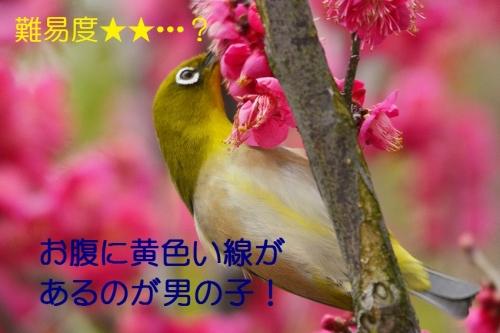 120_20160228011941bb3.jpg