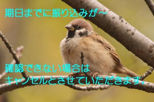 127_2015110104383430e.jpg