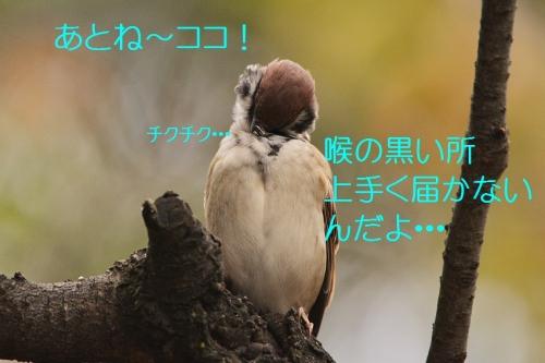 130_20151031214546139.jpg