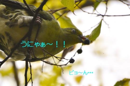 130_20151104205313b45.jpg