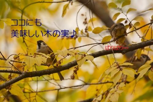 130_201512282221402f9.jpg