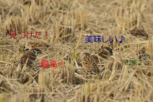 130_201601021848023c5.jpg