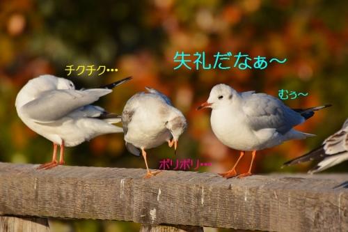 130_20160108214942f02.jpg