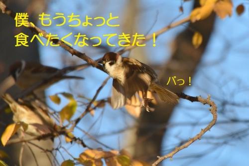 130_20160112184913b46.jpg