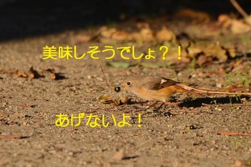 130_20160119171847e81.jpg