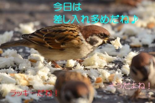 130_20160123215827c70.jpg