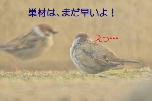 130_20160224220635e06.jpg