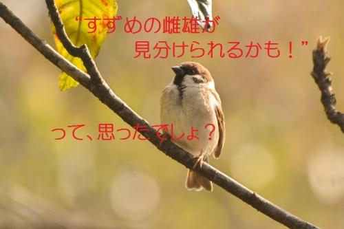 130_20160303192136b3d.jpg