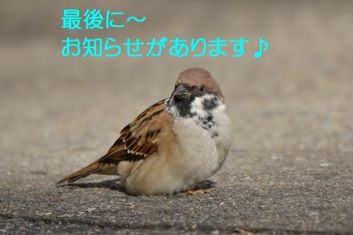 140_20151102192605a3a.jpg