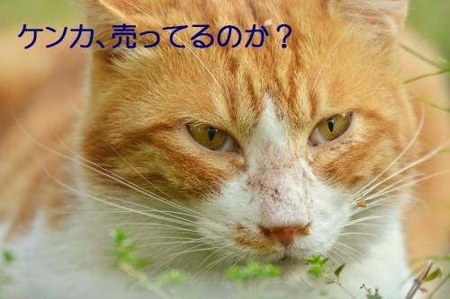 140_20151109190027051.jpg
