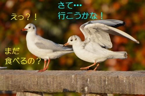140_2016010821494350a.jpg