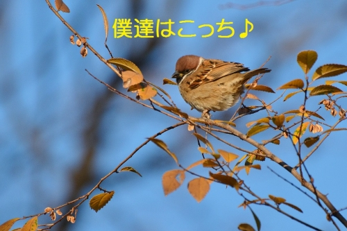 140_20160112184914d0c.jpg