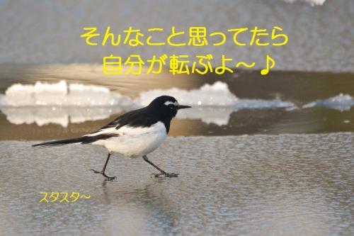 140_20160130220543018.jpg