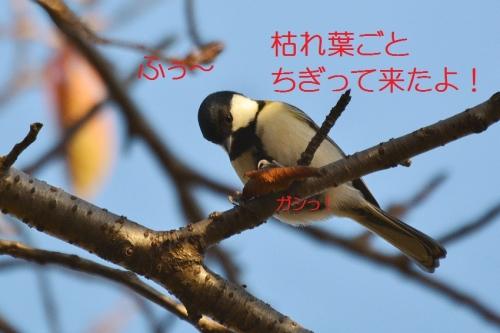 150_2015111817443267f.jpg