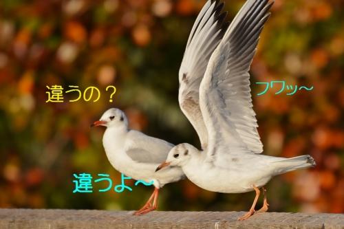 150_201601082151403ac.jpg