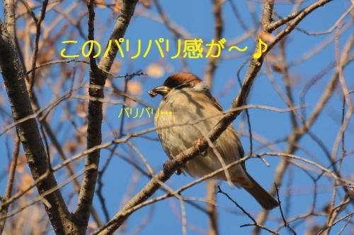 150_20160112184916974.jpg