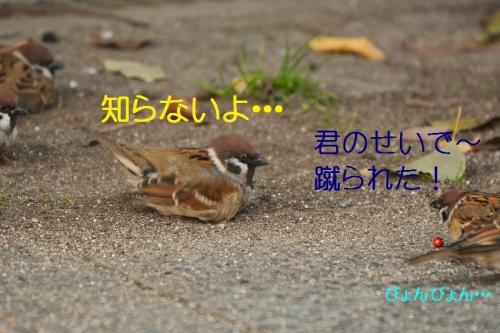 160_201512212040585fa.jpg