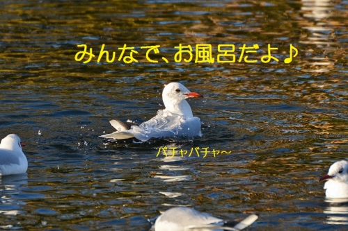 160_20160108215143d9f.jpg