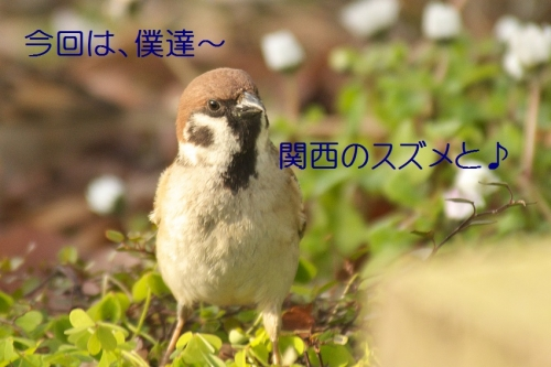 163_2015110104392038b.jpg