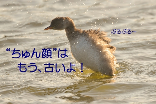 170_20151116202837d98.jpg