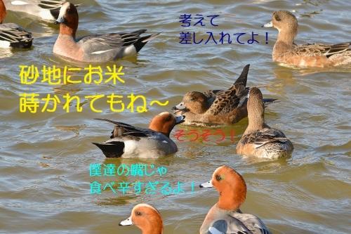 170_20160301185403eb3.jpg
