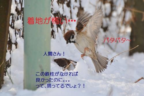 180_20160120193228c5b.jpg