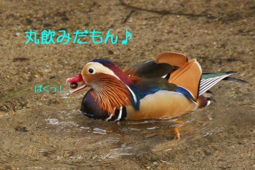 190_20160104185247ae1.jpg