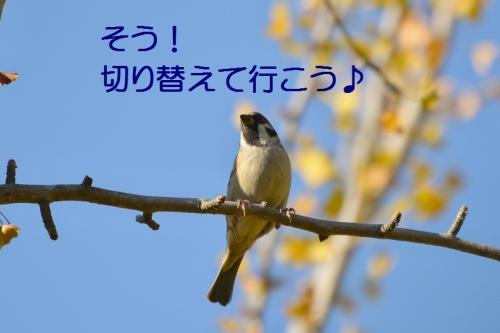 200_2015111817474023e.jpg