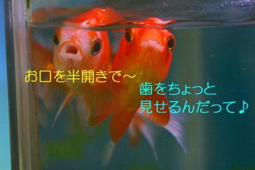 230_201511162029327ca.jpg