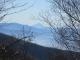 木立ちからの富士山
