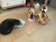 朝ご飯を食べるネコ達