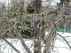 枝からツララ