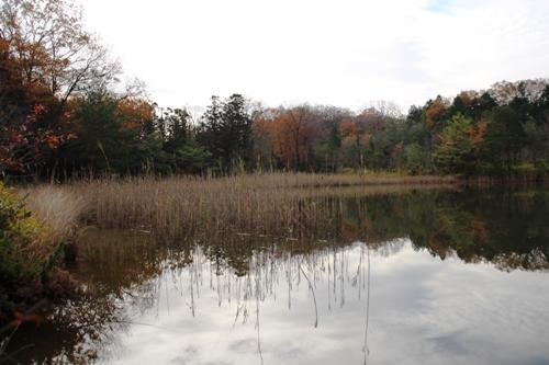 森林公園00003