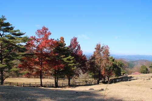神野山00025